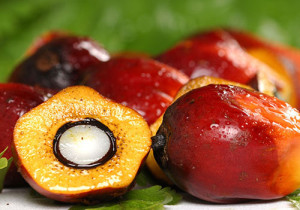 Дерево Ши_плоды